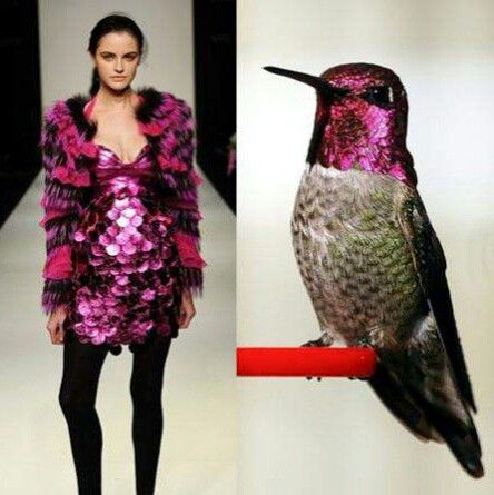 Pink shiny bird dres