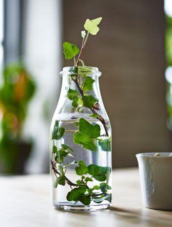 ENSIDIG Vase aus Klarglas mit einem Zweig Efeu darin