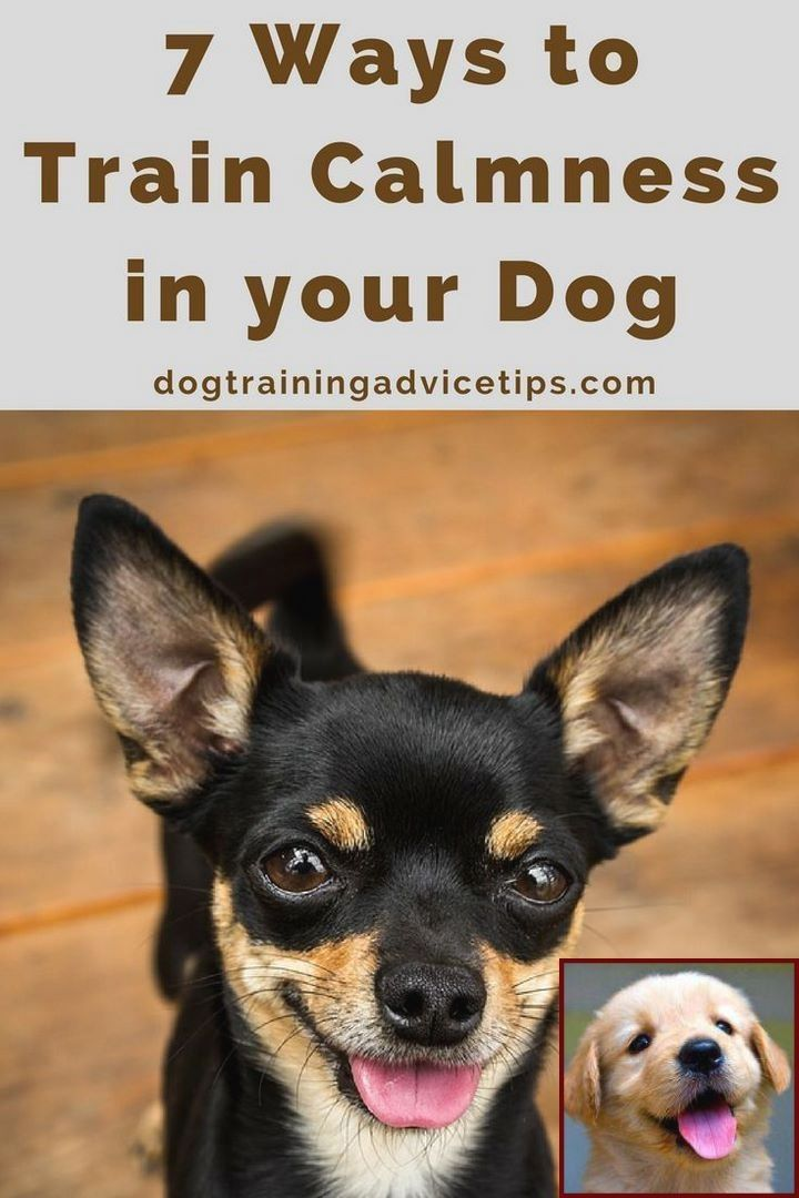 House Training A Puppy Services And Dog Behavior Training Near Me Dog Training Dog Training Obedience Dog Training Tips