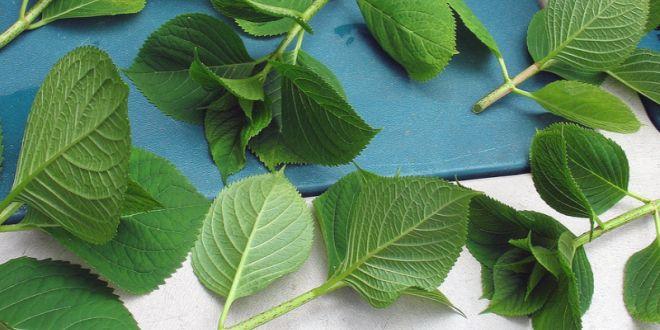 Le bouturage : Un façon rapide et économique pour multiplier les plantes de votre jardin ! - Santé Nutrition