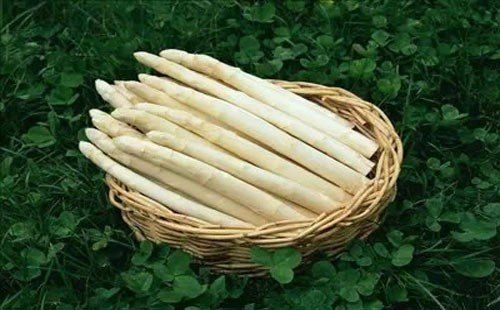20pcs Organic White Asparagus Seeds Vegetable Garden Vegetable Seeds