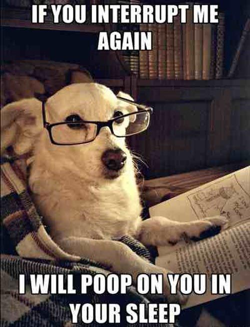 Reading memes   Reading Memes for fun   Funny animals, Funny pictures, Dogs
