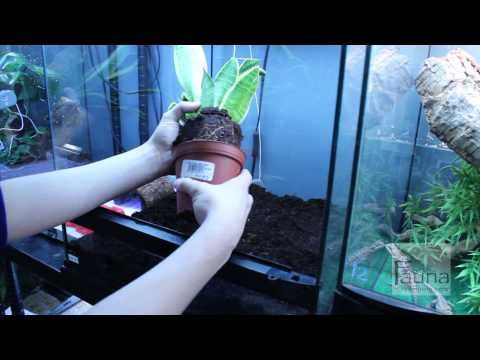 How to set up a Crested Gecko vivarium - YouTube