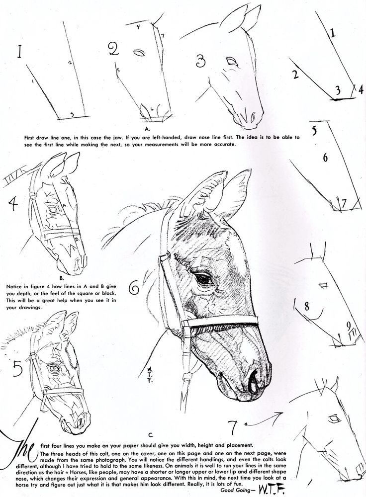 How to draw a horse. http://www.creativepro.com/files/story_images/20100402SAWG_fg21a.jpg