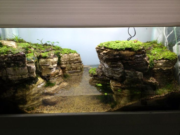 Pin By Stephanus Mardianto On Aquascape Pinterest