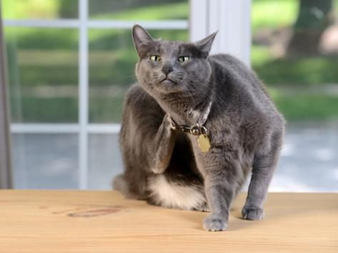 5 Common Cat Skin Problems | petMD