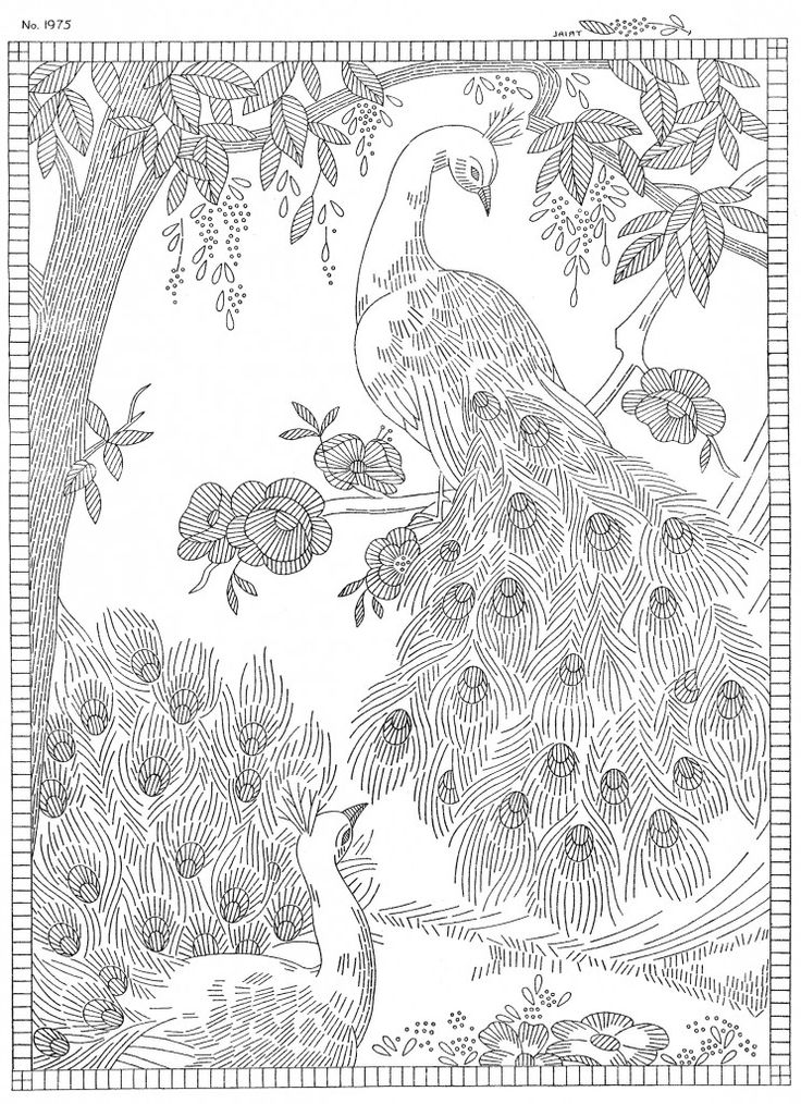 32 Best Peacock Pencil Sketches Images On Pinterest