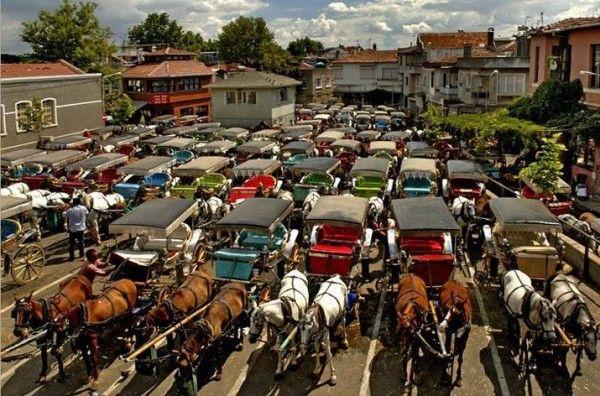 Horses are waiting for a walk #Buyukada Τα Άλογα περιμένουν για βόλτα!