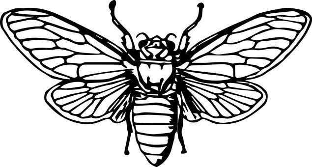 Μέλισσα, Μελισσών, Έντομο, Ζώο