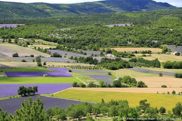 Le temps d'un week-end, échappez-vous au milieu deschamps de lavande au parfumdélicieux.Empruntezun itinéraire à traverscesmagnifiques paysages de plaines pour un spectacle haut en couleur.