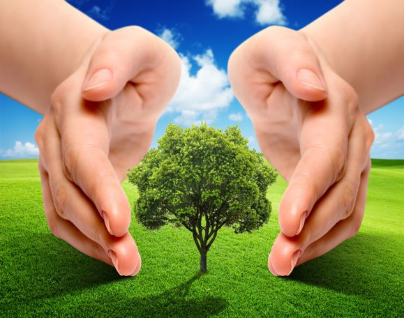 Restoring Ecosystems? It Is Environmentally Necessary and Also Economically Profitable - See more at: http://www.eticambiente.com/2014/restoring-ecosystems-it-is-environmentally-necessary-and-also-economically-profitable/