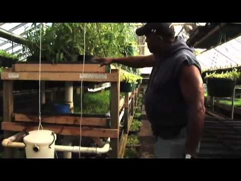 """*** Wake Up World Viewer Special - Easy Step by Step instructions on how you can do this in your own home http://aquaponics.wakeup-world.com ***     The co-founder of this initiative is called Will Allen and stated a company called """"Growing Power""""    Growing Power began with a farmer, a plot of land, and a core group of dedicated young people.  ...  http://www.tarhakaarchives.com"""