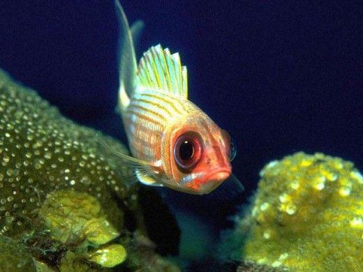 Ocean Marine Life | Free Saltwater Fish Screensaver 1.0 - Free Download Free Saltwater ...