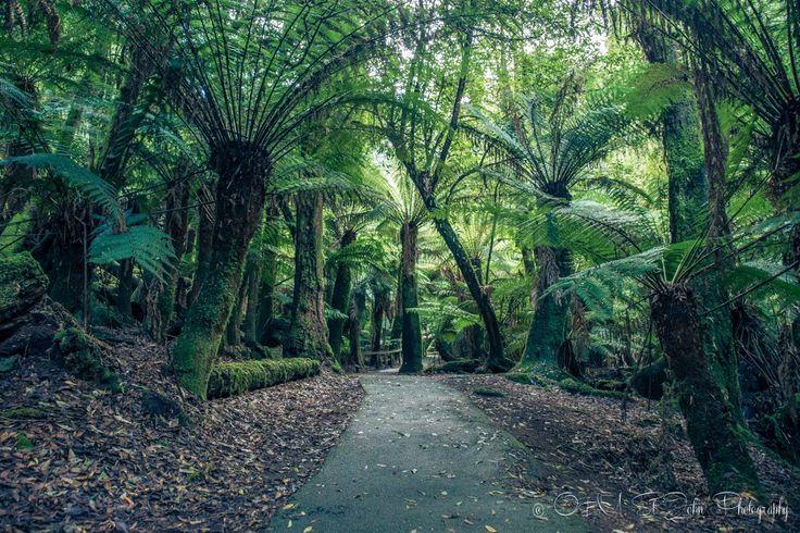 Mt Field National Park, Tasmania.
