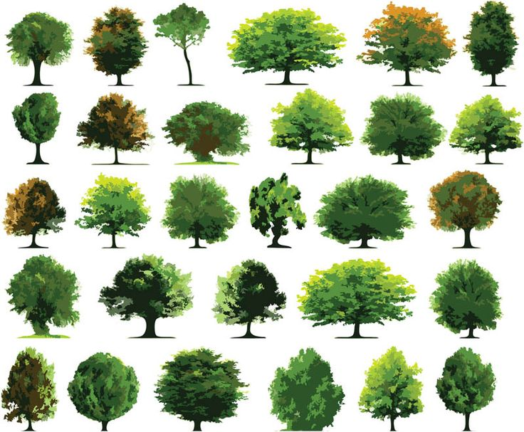 Green trees vector | Vector Graphics Blog