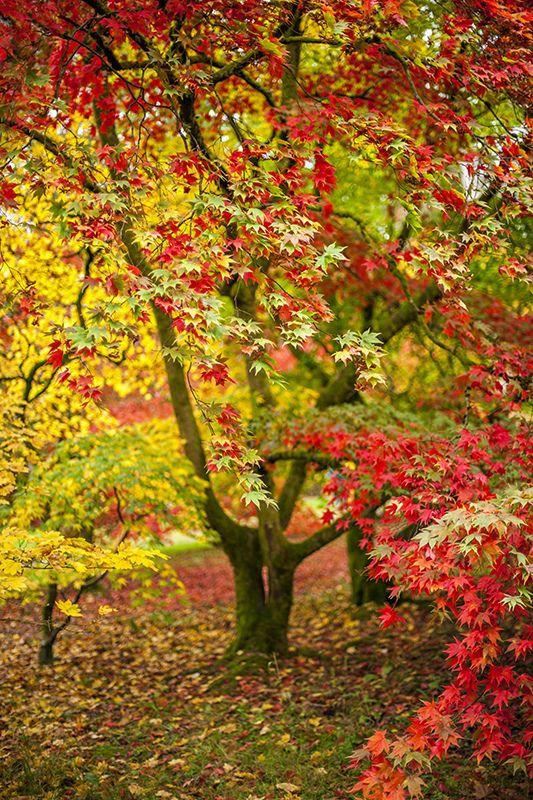 The Fall   por Jacky Parker Floral Art