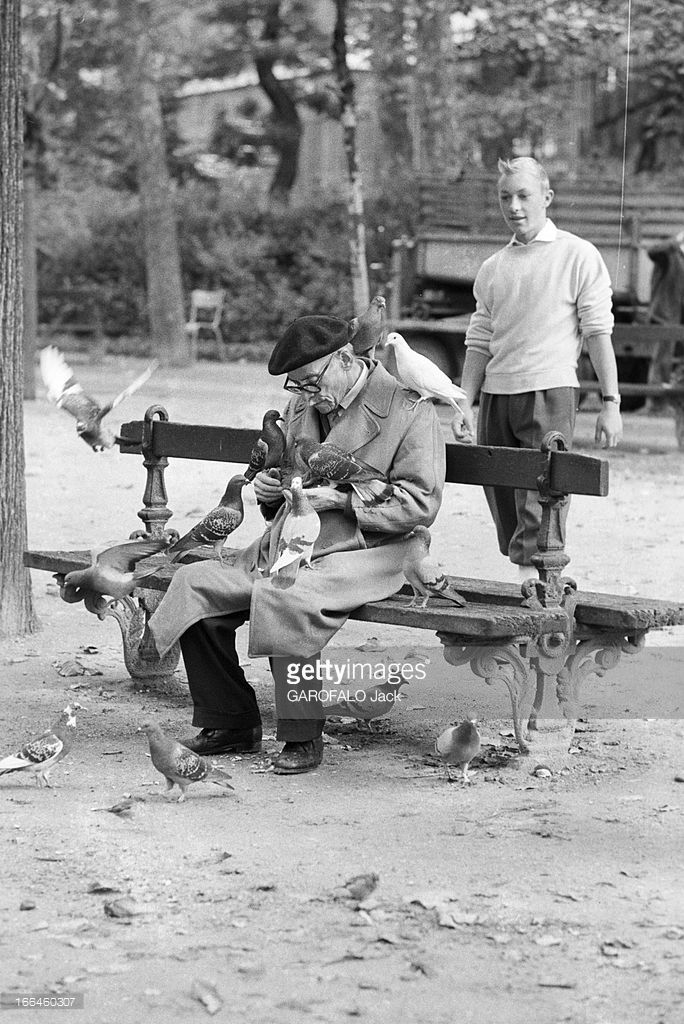 Meeting With Jean-Pierre Talbot, Playing Tintin. France, 10 octobre 1960, l'acteur belge Jean-Pierre TALBOT incarne le personnage 'Tintin' sur grand écran. Ici dans un jardin, il se tient debout derrière un homme âgé assis sur un banc public, couvert de pigeons qu'il nourrit.