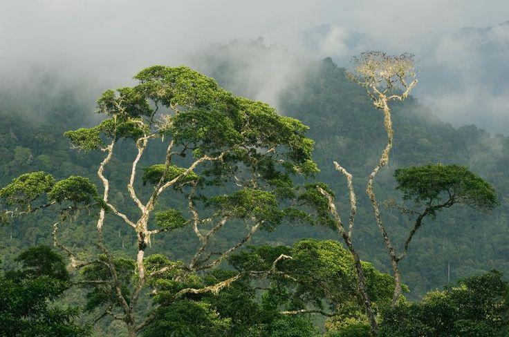 """Panama: Darien National Park""""Forming"""