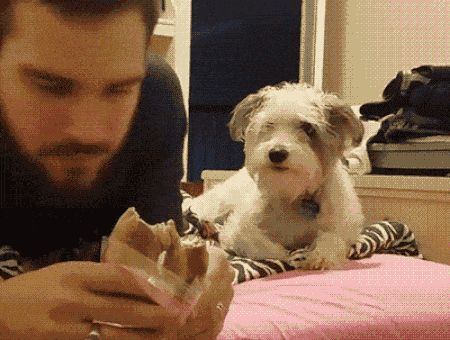 21 Best GIFs Of All Time Of The Week #191 from best GOAT and Best of the Web