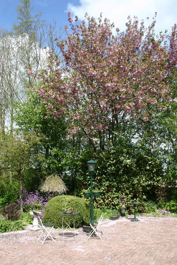 De tuin van Theeschenkerij The Wisple