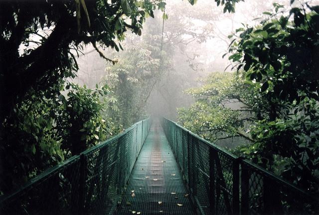 dream land.: Del Rio, Cloud Forests, Beautiful Photos, Forest Park, Costa Rico, Costa Rica, Costa Rica, Rica Cloud