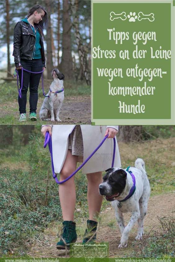 On the leash and not interested in other dogs – that works
