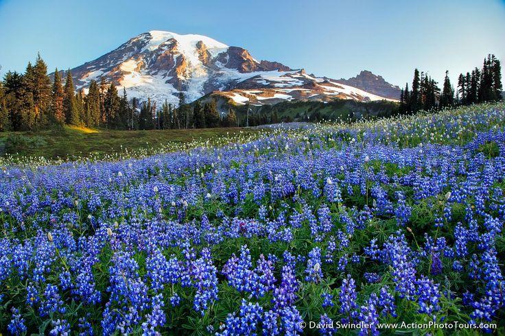 Rainier Wildflowers by David Swindler on 500px