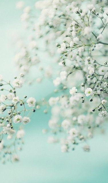 Beautiful Flowers Garden: Beautiful