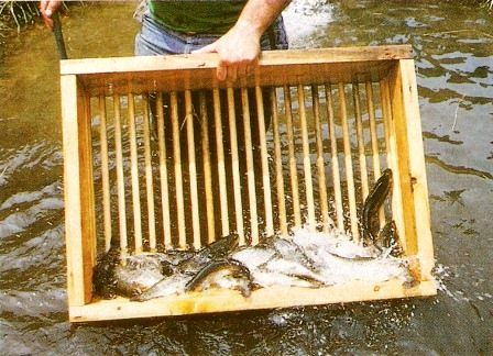 Raising rainbow trout commercially is a profitable alternative to conventional agriculture that can be practiced with very little land, provided that water conditions in the facility and the care and feeding of the trout are properly maintained.data-pin-do=