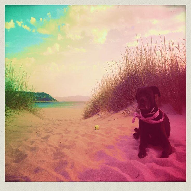 Mushi in paradise beach in Elafonisos <3