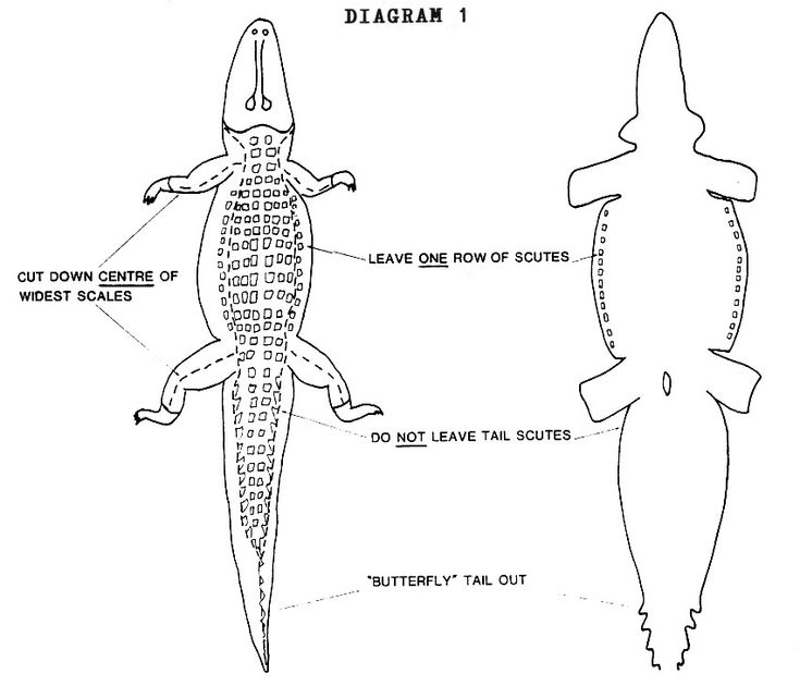Alligator Hunting Regulations Overview   Louisiana Department of Wildlife and Fisheries