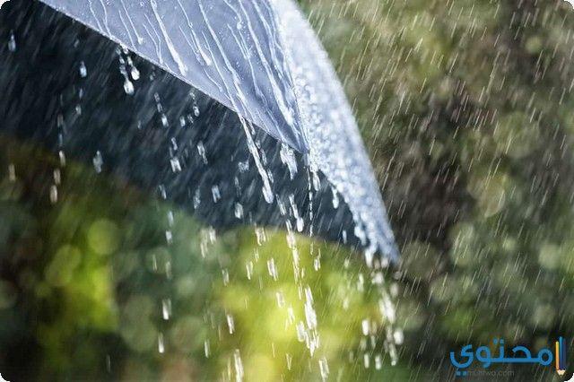 تفسير رؤية حلم المطر في المنام لابن سيرين والنابلسي In 2020 Umbrella Photography Rain Photography Even The Rain