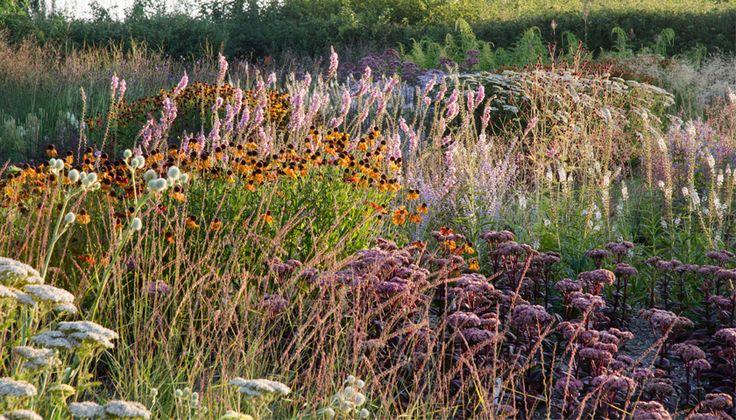 47 best referenties tuinen piet oudolf images on for Piet oudolf favorite plants