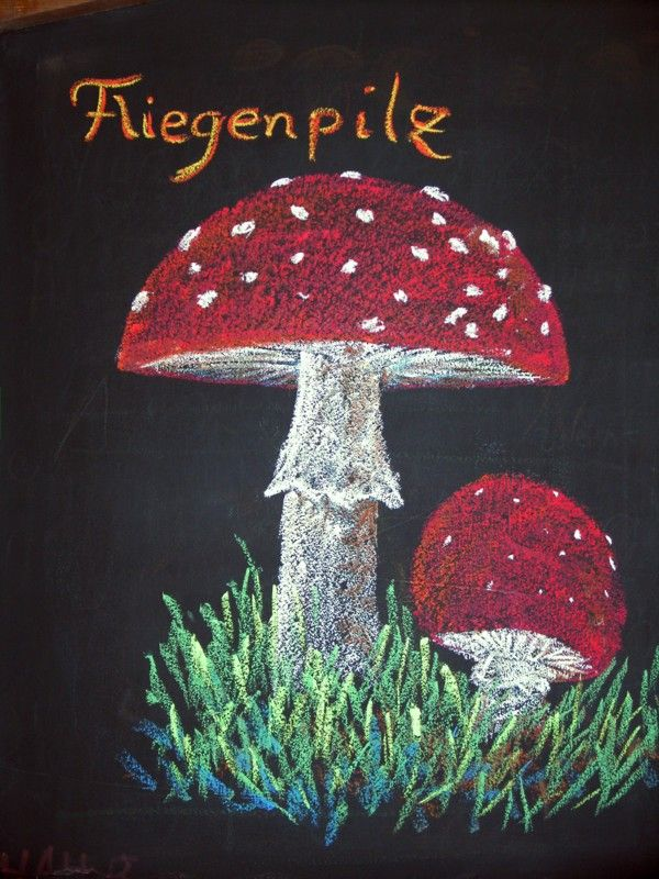 Waldorf ~ 5th grade ~ Botany ~ Mushroom ~ chalkboard drawing
