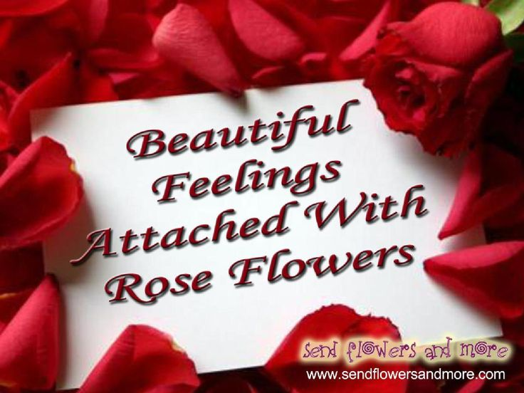 #Beautiful Feelings Attached With #Rose #Flowers