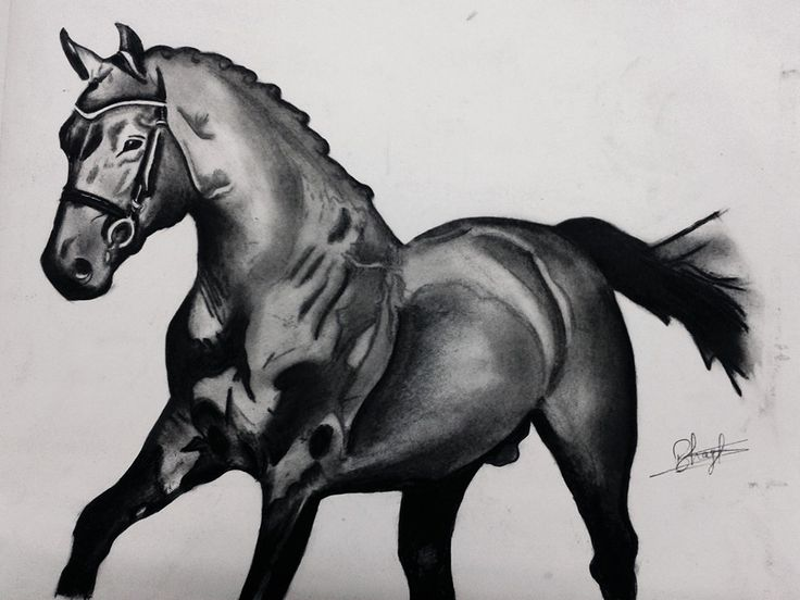 HORSE Charcoal sketch by Swanand Bhagat (INKLLUSION)
