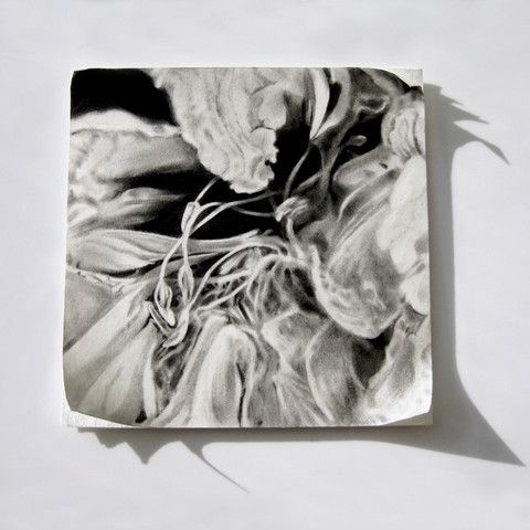 Six Stages VI by Haywood | PLATFORMstore. Charcoal drawing on mat board