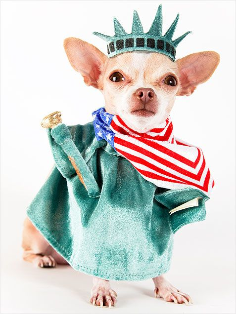 17 Best images about Paws-itively Patriotic Pets on ...
