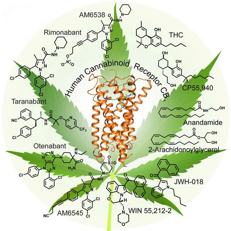 High Times: Taking A Look at the Marijuana Receptor