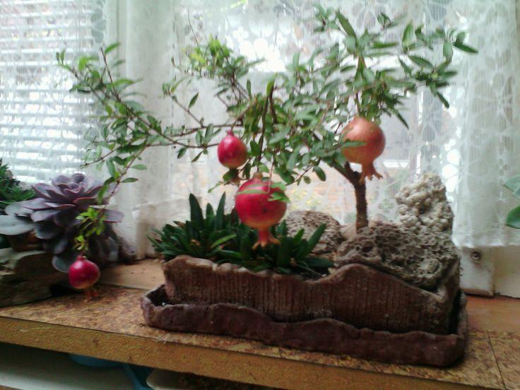 granátové jablko-NANA