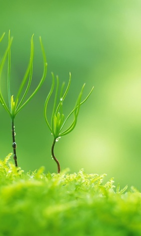 *Green! What color better correlates with growth, and new growth...