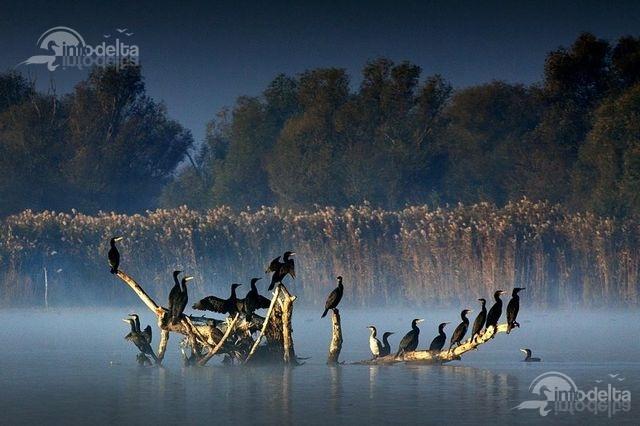 Danube Delta by Sorin Onisor