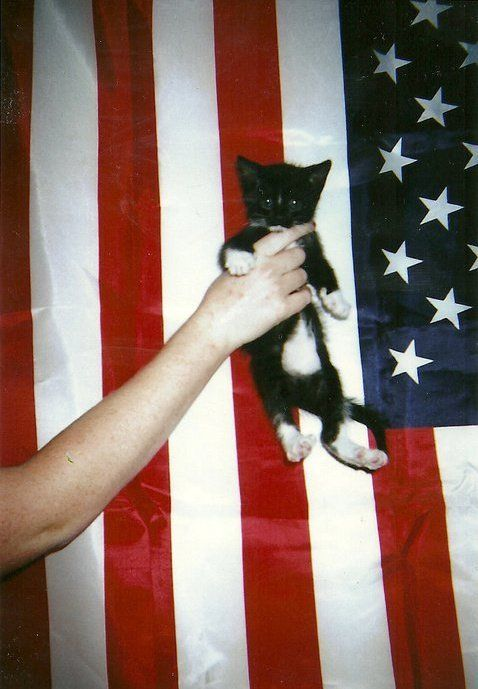 U S of fucking A.Photos Hanging, Tuxedos Cat, Flags, Soft Grunge, Kitty Kat, 4Th Of July, Kittens, Baby Tuxedos, Grunge Vintage