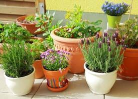 How to Grow Vegetables in Pots - No Yard Required!