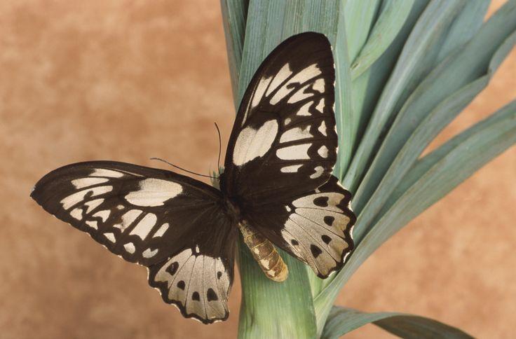 Tips para crear un jardín que atraiga aves y mariposas. Introducción