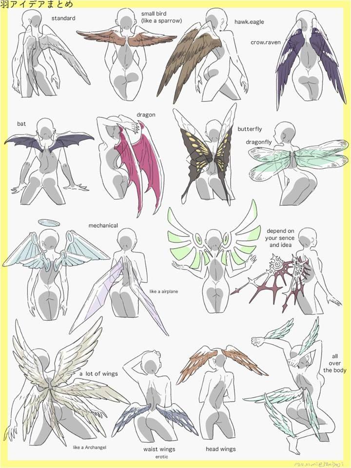 Diferentes tipos de alas