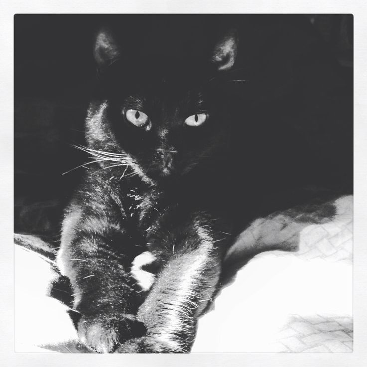 Kirby, happy in the sunspot. #bnw #cats