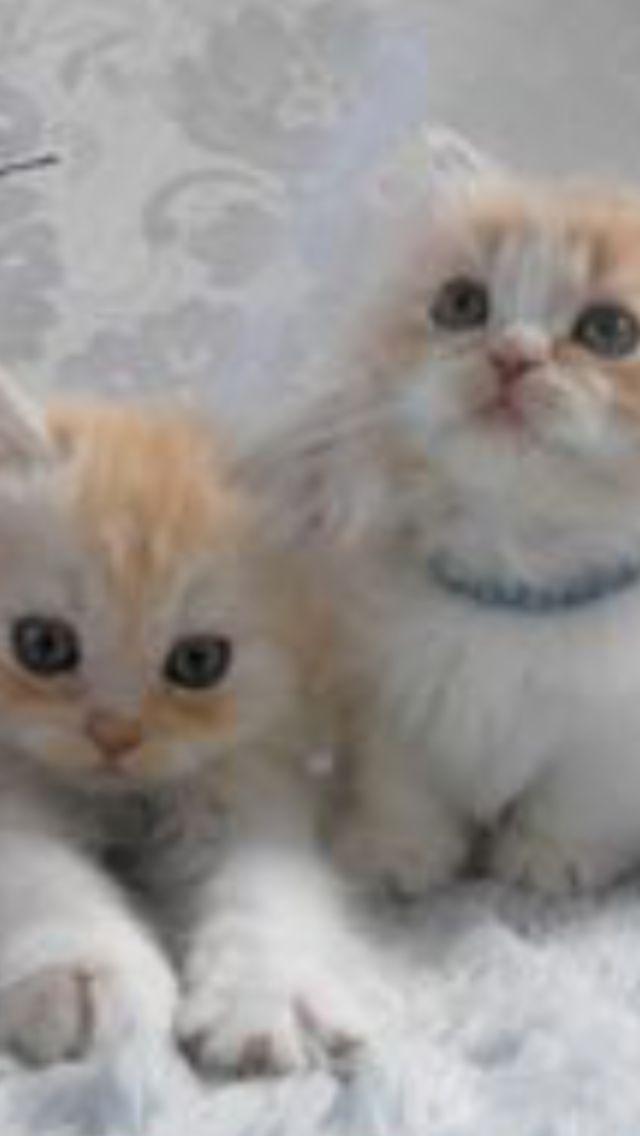 Hier ist ein Bild von meinen Katzen, ihre Namen sind Dude und Frerard und sie sind …   – Memes or other things I made