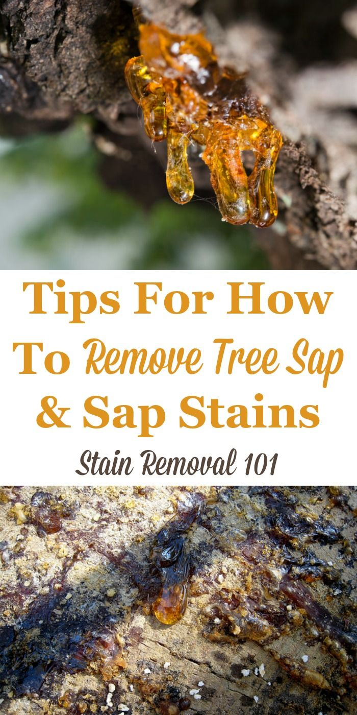 Sap Stain Removal How To Remove Tree Sap Remove Tree Sap