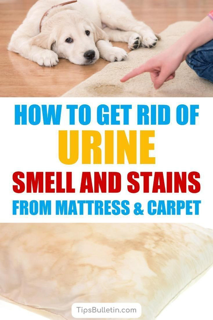 How To Get Rid Of Dog Wee On Mattress Check Now Blog